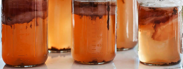 The Secrets of Kombucha